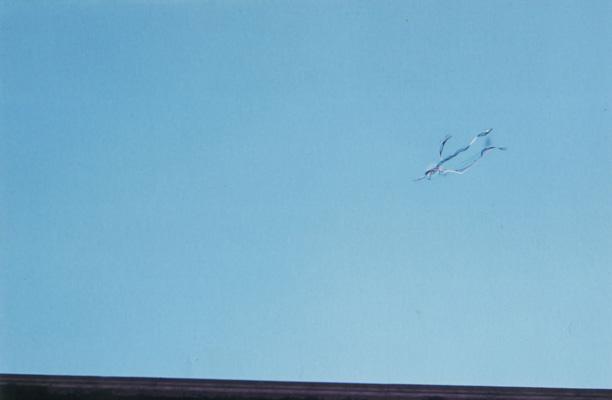 1973_cielo-bucato-2