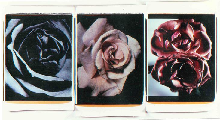 Trittico delle rose,1988-89. Trittico di polaroid, 61x51 cm ciascuna