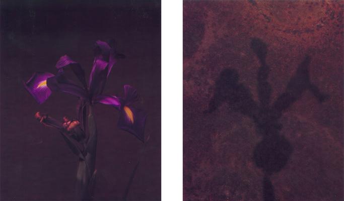 1996_irisombra